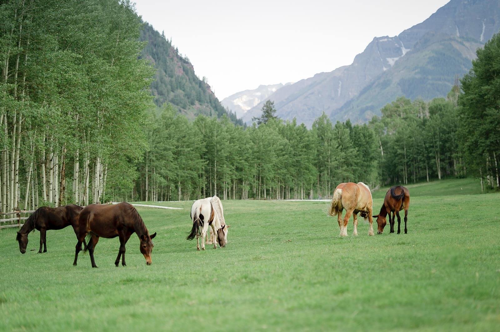 Aspen Wedding at T-Lazy-7 Ranch